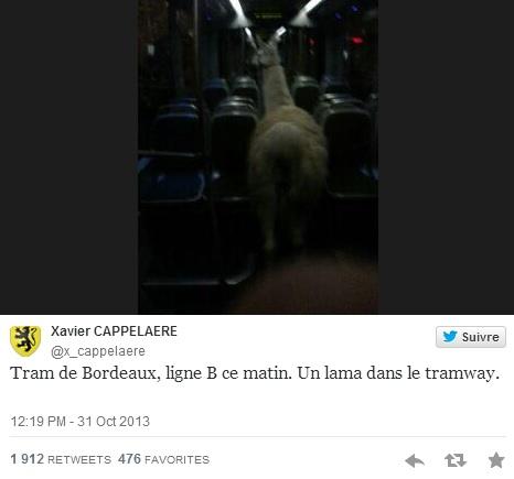 Actus - Serge le Lama, itinéraire d'un buzz mondial - 1er tweet