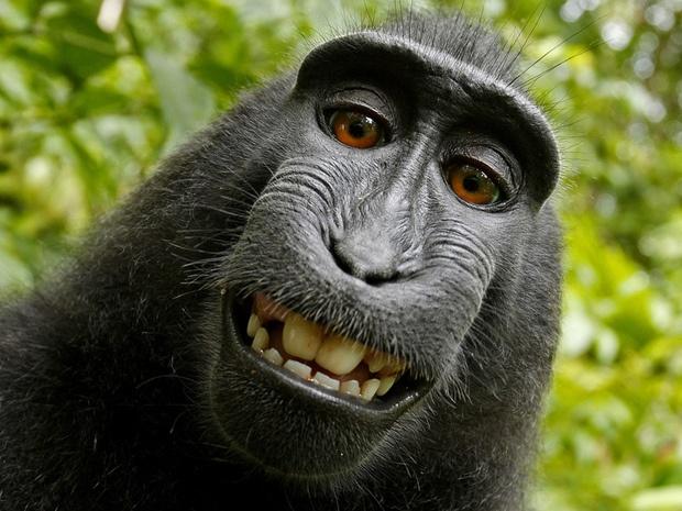 Un selfie c'est quoi ?